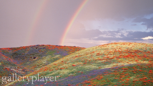 Rainbow to Field of Poppies and Lupines