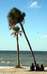 palm people