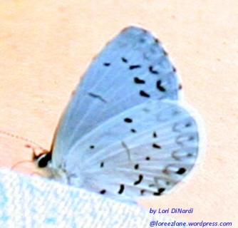 baby butterfly 2