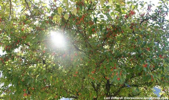 sun berries wm 4