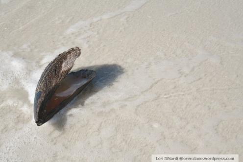 seashell wm