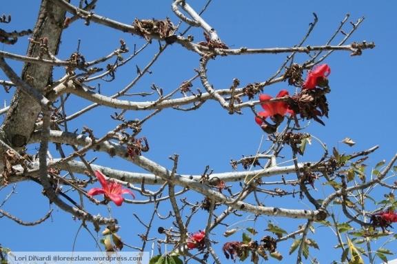 dead blossoms wm