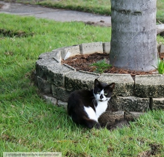 bw cat wm
