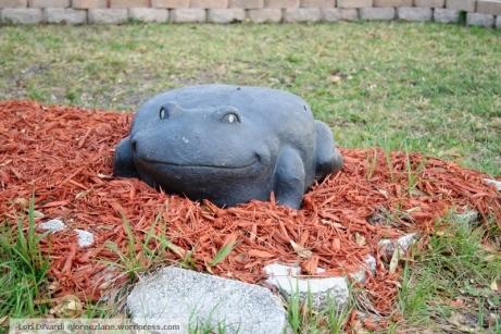 frog stat wm