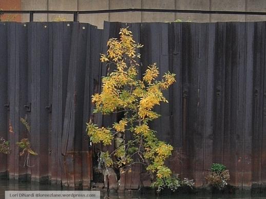 wall tree 2 wm