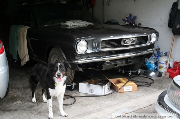 What's this? Mustang Max! In case you didn't know, my husband's a car guy. He's refurbishing this 1966 mustang. Original color was red. It's now gun metal gray.