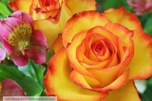 rose lily wm