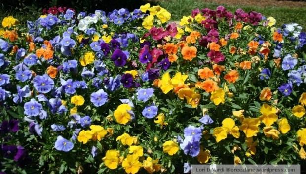 colorful floral 2 wm