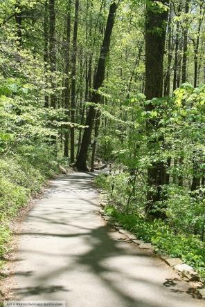 woods trail wm