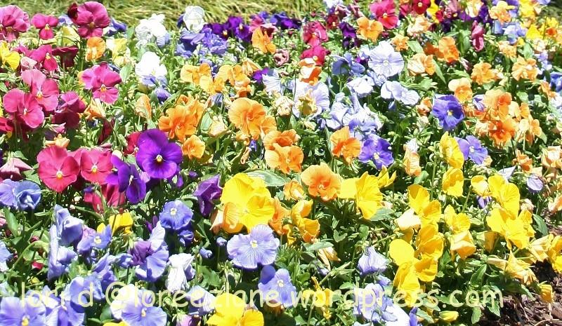 colorful bouquet wm