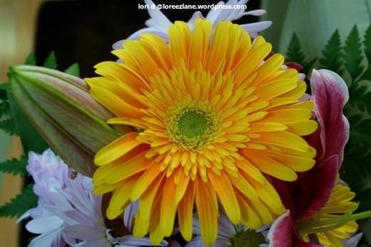 daisy wm