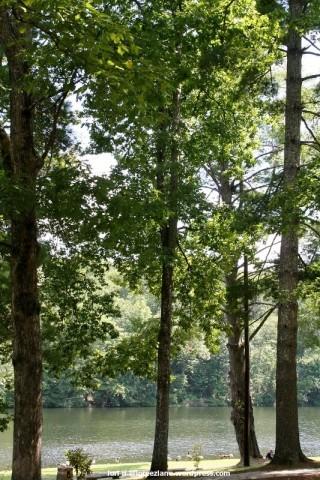 lake trees wm