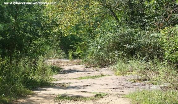 shrt trail 1 wm