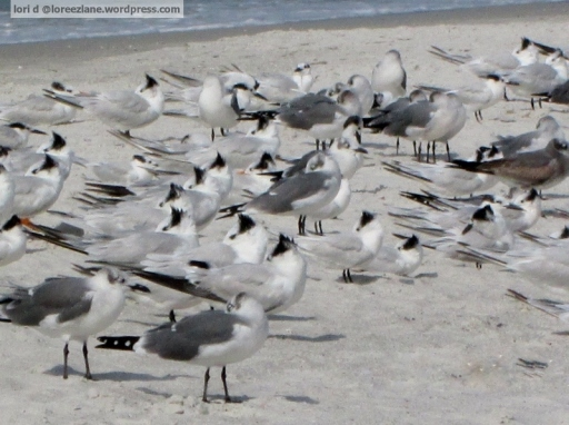 sea of gulls wm