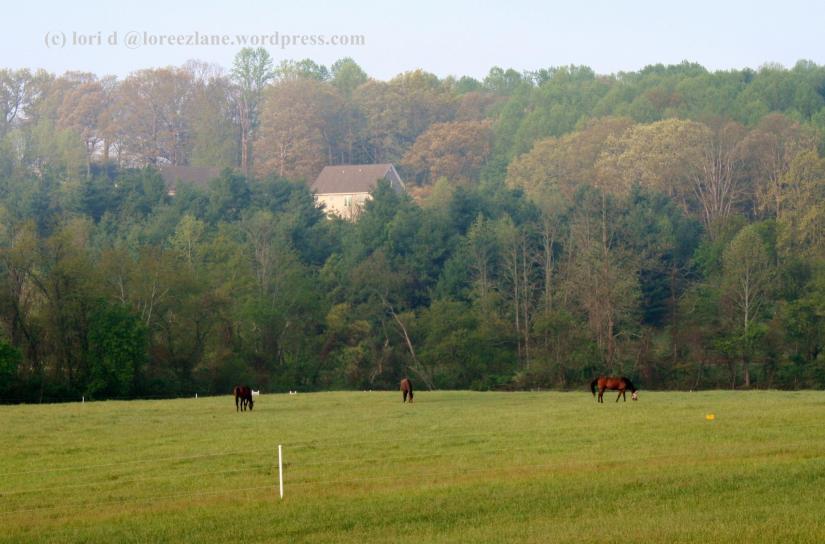 nd horses wm