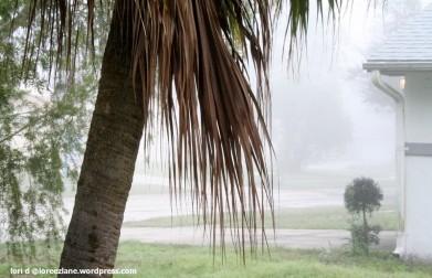 palm fog wm