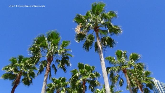 sky palms wm (800x450)