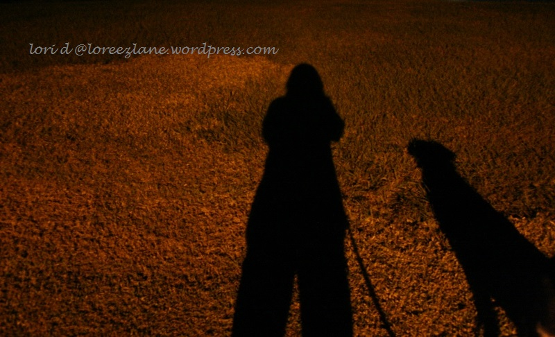 night shadow wm (800x486)