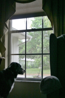 dog-window2