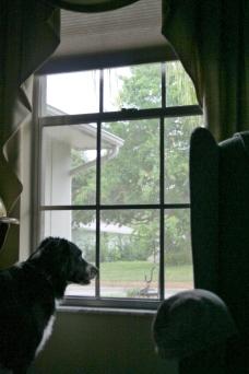 dog-window2
