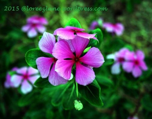 floral2 wm