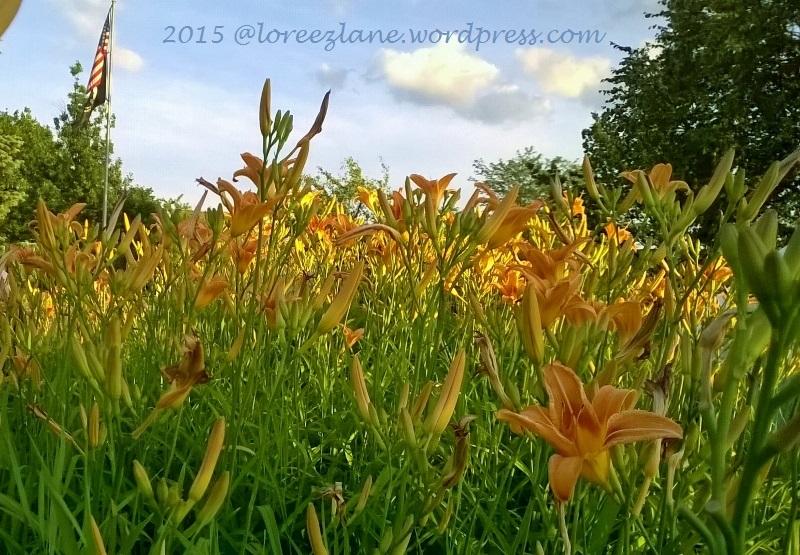 lotflowers (800x555) wm
