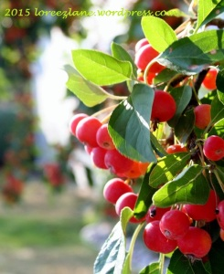 mornberries (652x800) wm