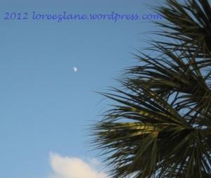 moon-palms wm