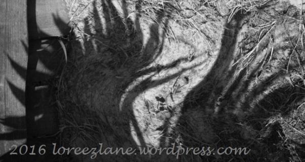 shadows-3wm