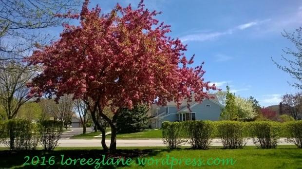 springtree2 (800x449)wm