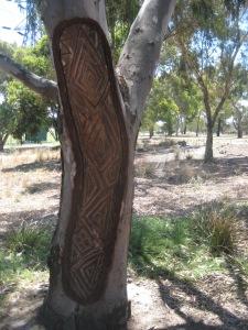 aboriginal_scar_tree