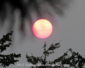 sun2015b-800x639wm